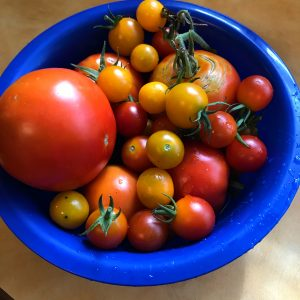Photo of home grown tomatoes.